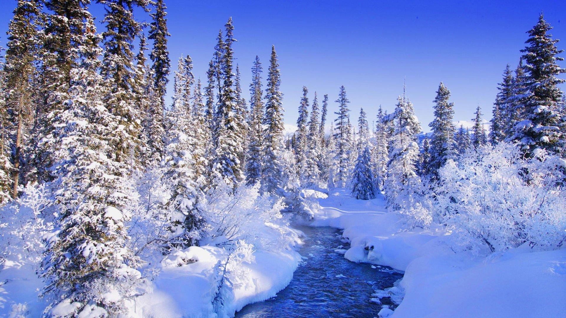 唯美冬日雪景图片桌面壁纸,分辨率:1920x1200