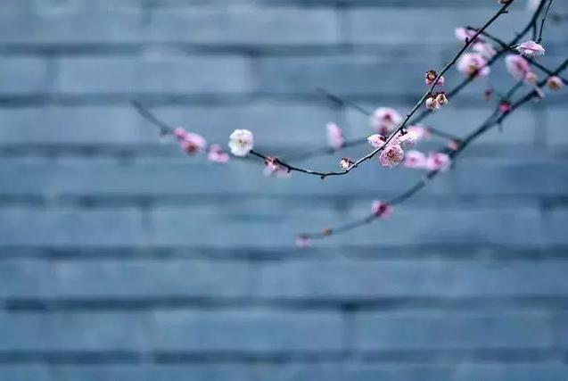 春分一盏茶,杏花吹满头