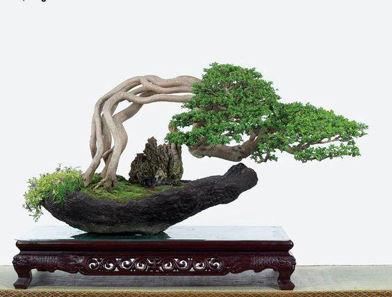 盆景欣赏:悬崖式,长松落落,卉木蒙蒙图片