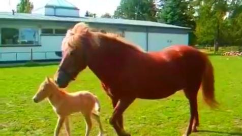 世界上最可爱的马宝宝!