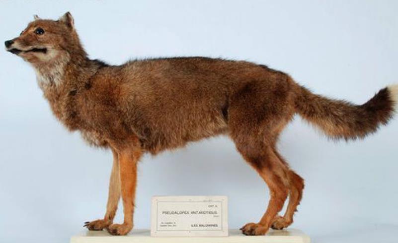 5种已绝迹的动物,第3种灭绝原因不明,复活几率高