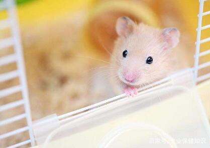 种子主食可爱的频道:仓鼠各种奶茶乌龟和杂草!dnf换粮食壁纸图片