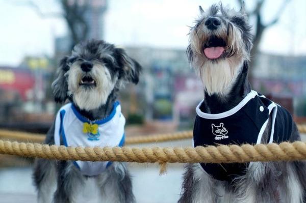 宠物犬出现浓烈气味时,我们应该做的二种处理方法,新手要多学习