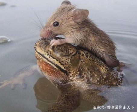 """人性化的小动物,你们是不是都""""成精""""了?"""