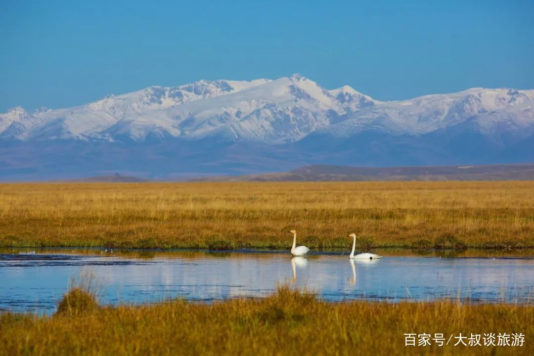 万万没想到,看了《飞驰人生》,我想辞职去新疆!图片