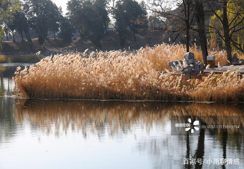 2018年11月29日,北京,在皇家园林圆明园,金色的柳树与湖中的芦苇、残荷交相辉映,构成一幅如诗如画的冬日美景,令人陶醉。  2018年11月29日,北京,在皇家园林圆明园,金色的柳树与湖中的芦苇、残荷交相辉映,构成一幅如诗如画的冬日美景,令人陶醉。  2018年11月29日,北京,在皇家园林圆明园,金色的柳树与湖中的芦苇、残荷交相辉映,构成一幅如诗如画的冬日美景,令人陶醉。  2018年11月29日,北京,在皇家园林圆明园,金色的柳树与湖中的芦苇、残荷交相辉映,构成一幅如诗如画的冬日美景,令人陶醉。