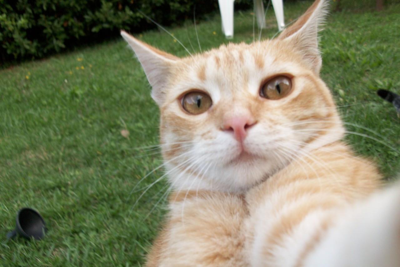 权威学术期刊证明,猫咪其实可以听懂你叫它,铲屎官你尽管大声喊