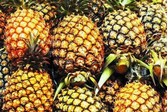 菠萝和凤梨的区别原来这么大,活了30年才知道,买错还觉得占便宜
