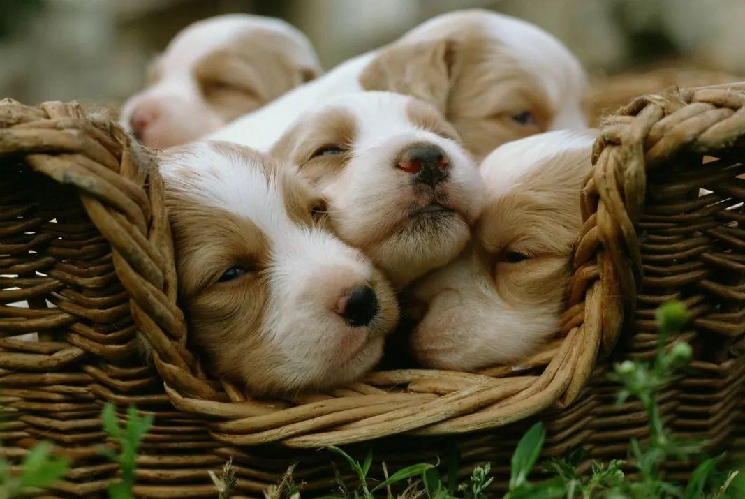 真羡慕这群小狗子想睡就睡的能力!萌翻你没商量!