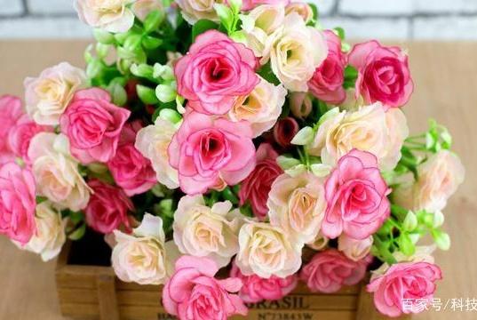 三天卖空千亩玫瑰 聚划算用爆发力开启品质鲜花产地直供新时代