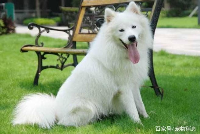 当狗狗有下面5种表现时,说明它身体出现了问题,在向你求救!