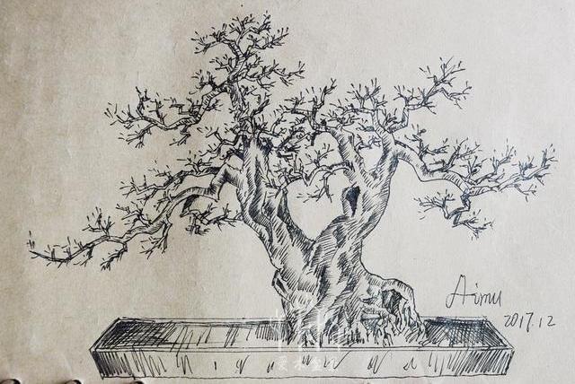 爱木盆景I 如何完成一幅盆景造型设计图(1)