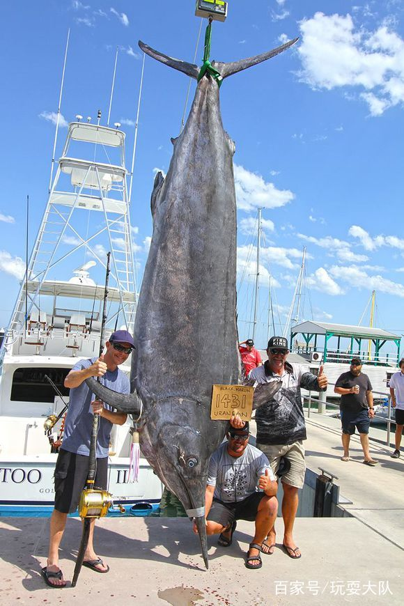 钓鱼差点钓破世界纪录,650公斤大鱼老外都看傻