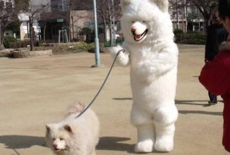 冬天遛狗子冻手怎么办?这位铲屎官的沙雕办法千万不要学!