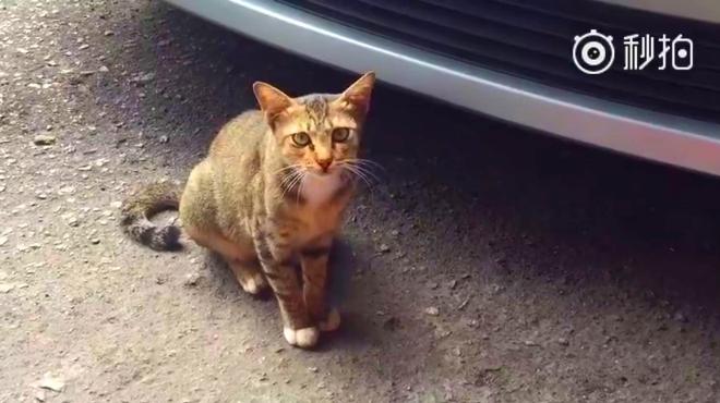 跟我聊天的小猫咪可爱极了!