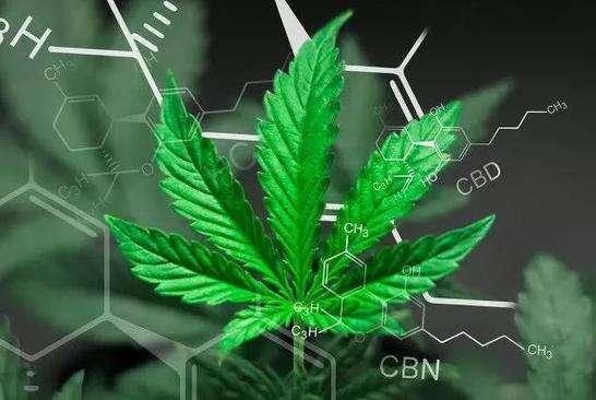 神奇!工业大麻,一种让投资者兴奋的大麻