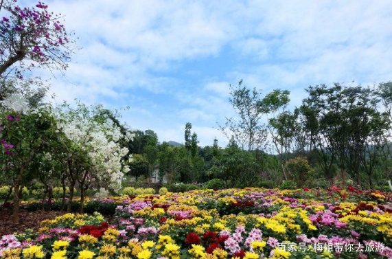 梅姐带你去旅游,四川著名景点:天府花溪谷!