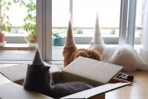 掉下来的猫毛不要丢,收集起来给猫咪做件衣服