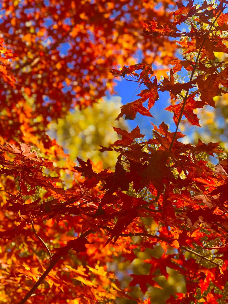 秋天远方风景图片