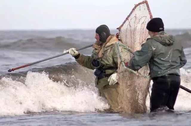 波罗的海 琥珀打捞