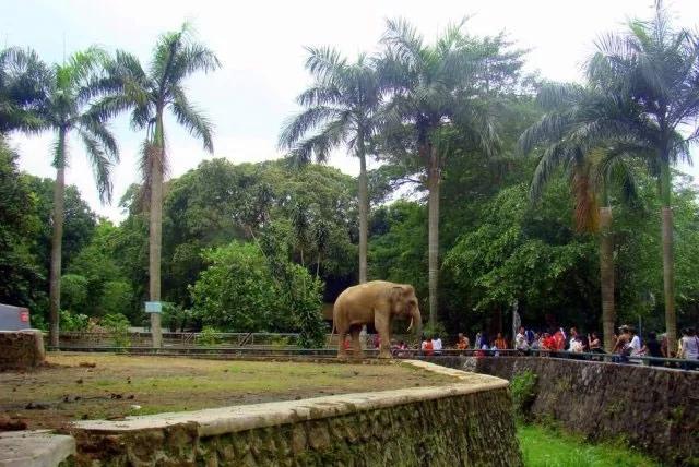 拉古南动物园,是印度尼西亚著名的动物园,里面还有大家喜欢的大象.