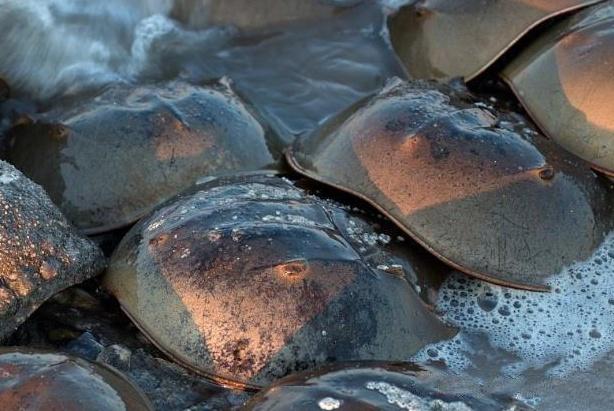 """存活4亿年,人称""""活化石"""",躲过了灾难,却败给中国吃货的嘴!"""