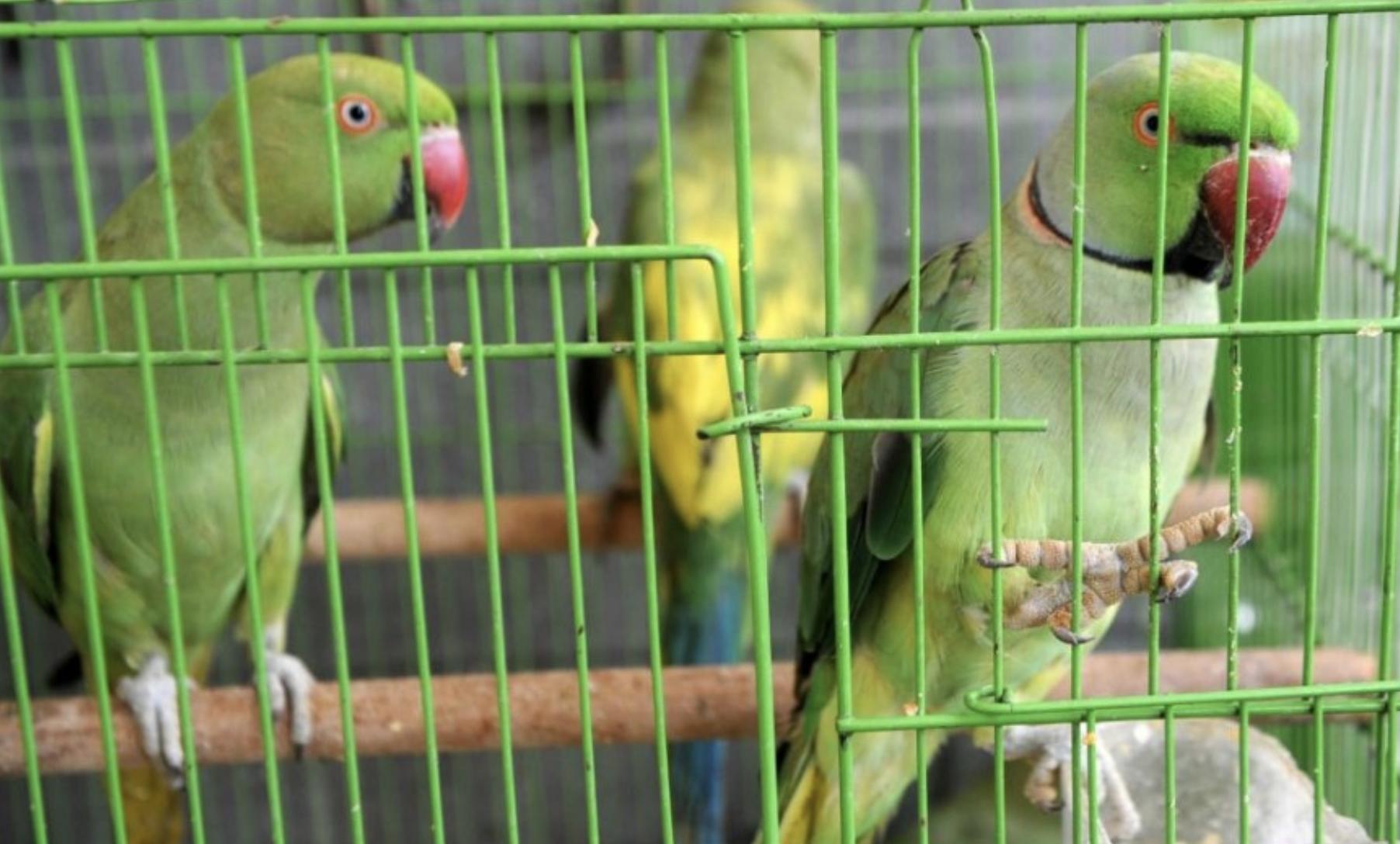 13只鹦鹉上印度法庭当证人,法官还当庭向它们问话……