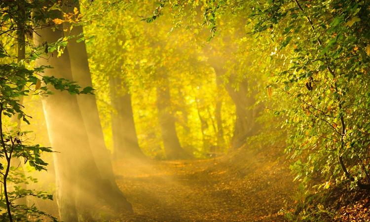 黄色片树林系列_阳光照在黄色的树林中,看起来十分的美丽,让人感觉心情很好.
