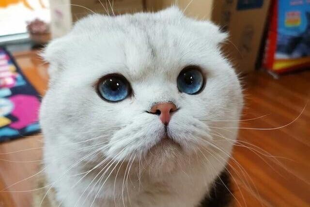 猫咪冷知识!曾经令33个物种灭绝的猫咪,为何与人类组合在一起?