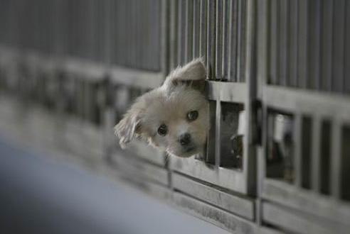 网上领养狗狗是真是假?领养狗狗需要注意什么?