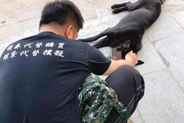 黑色流浪狗几乎毁了半张脸,头部还有凹洞……兽医:伤口是人为的