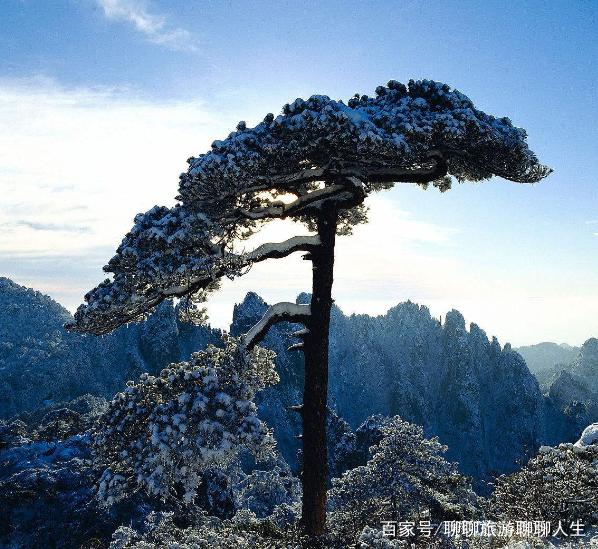 安徽黄山风景秀丽,你去过这里吗?冬季,一棵孤松傲立在山中