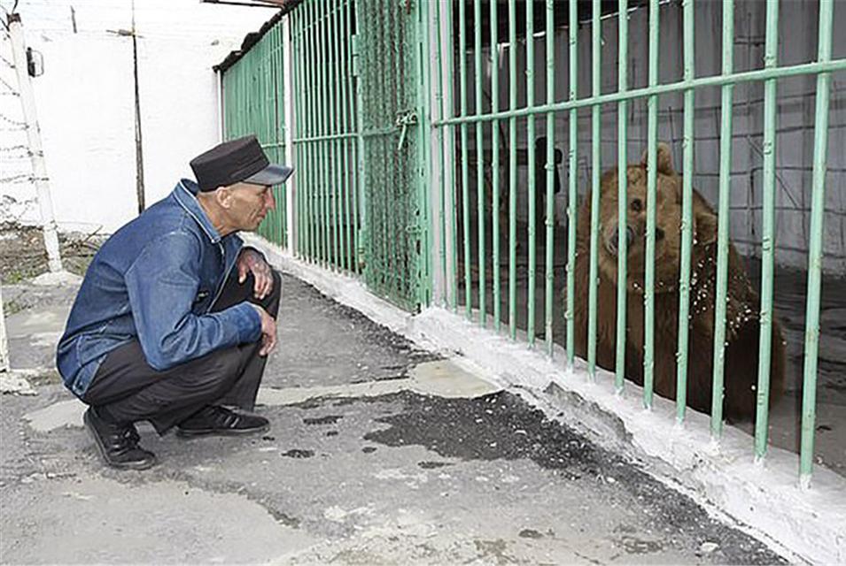 一只被判终身监禁的母熊,在哈萨克斯坦监狱已熬过15年