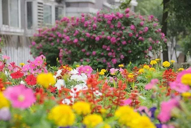 我有个小院,春暖花开等你来