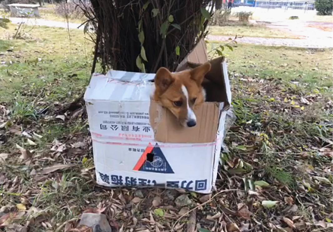 柯基被遗弃在公园里,网友看见后就把它带回家了,信中内容很感人