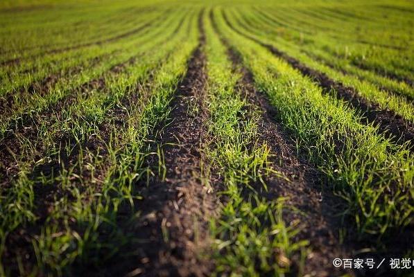很多农产品都涨价了,为何大豆价格却再创新低?看完就明白了