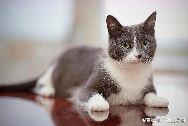 科学家调查了3000只猫后发现:猫的行为习惯,其实模仿自养猫人