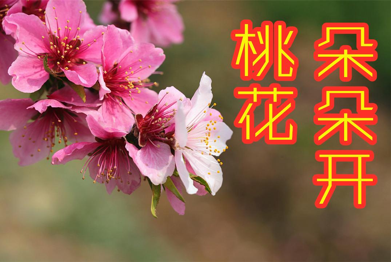 4月中旬桃花朵朵开,遇见真爱,春风送喜,富贵在望的4大星座