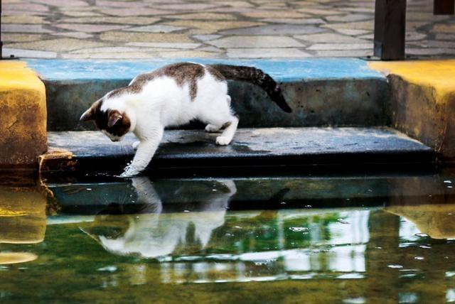 流浪猫到河边抓鱼果腹,好不容易收获大鱼,见到同伴可怜它这样做