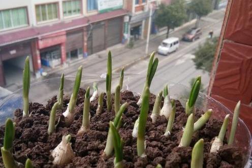 """家里有""""瓶子""""别扔,拿来种""""蔬菜"""",放阳台养护,春天就能吃!"""