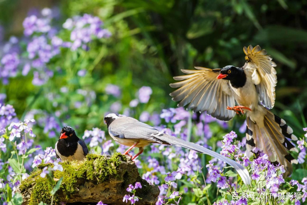 南京中山植物园赏花季,文艺感100分,拍照党的疗愈胜地