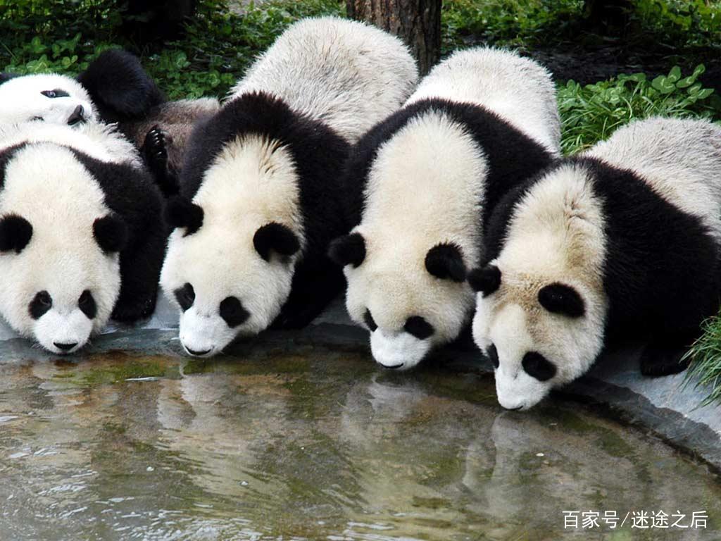 陕西的美之西安秦岭野生动物园,被誉为西安人的后花园!