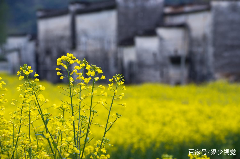 阳春三月,到婺源看最美的油菜花和徽派古村图片