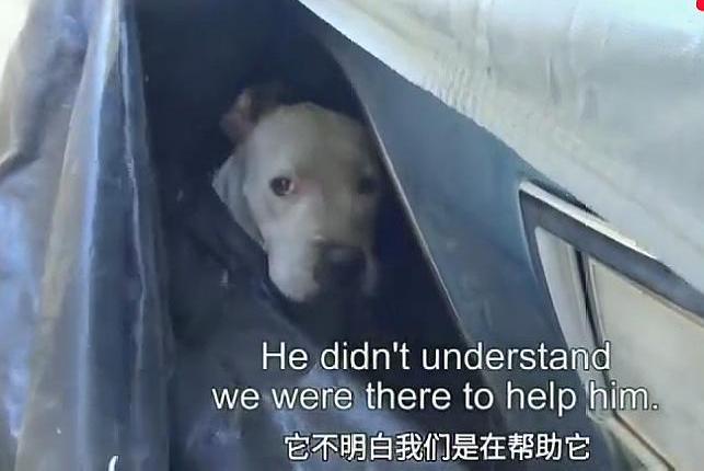 宠物狗走丢车底哭红了双眼,好心车主为其找到主人,网友:嘚瑟了