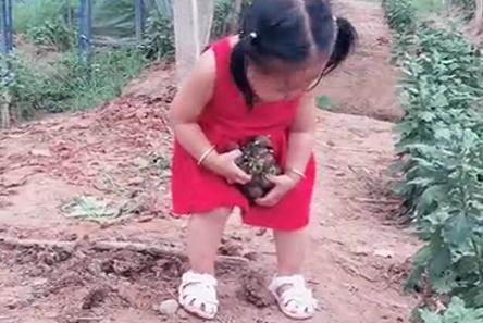 小姑娘果园吃葡萄,吃出六亲不认表情,好让人羡慕