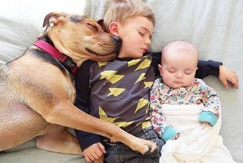 每一只狗狗都是上天派下来陪伴小主人的