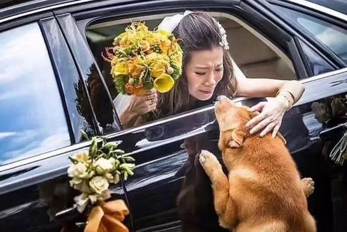 女主人要出嫁,狗狗守在房门口不让新郎进去,满满的舍不得!