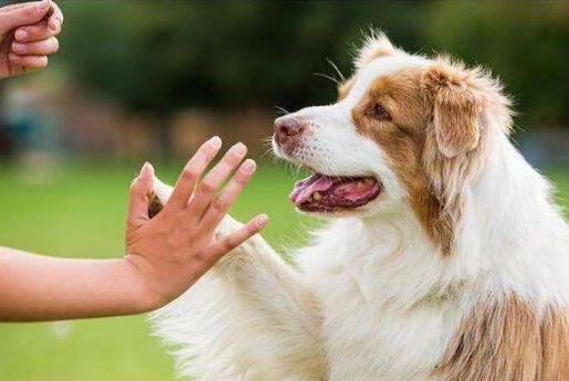 虽然狗狗不会讲话,但是有这5种动作的它,已经表示爱上了你!