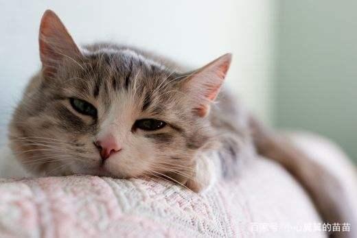 猫咪生病了,花很多钱治病应该吗?