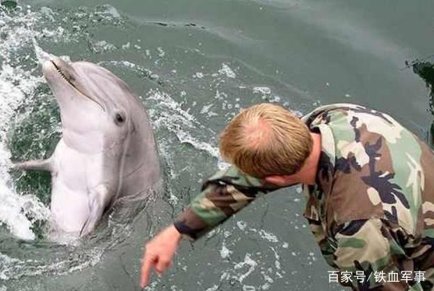 美海豚兵何以在战场造反,炸漏自家战舰?真实原因让人愤怒
